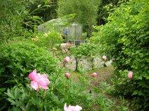 Trädgård 1